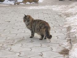 Январская Одесса десять лет назад: лед, море, снег и котики (ФОТО)