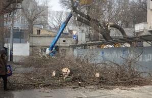 В Одессе на Молдаванке одиозный застройщик уничтожает деревья (ФОТО)