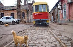 Одесские пятничные котики: хозяева трамвайного депо (ФОТО)