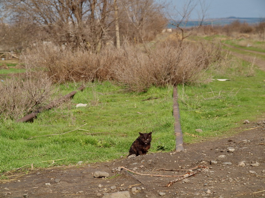 Конец пути на станции Березино. Дальше - два десятка километров полуразрушенной насыпи до Бессарабской.