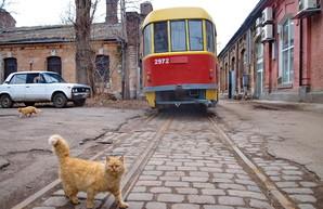 В одном из трамвайных депо Одессы сохранились узкоколейные рельсы (ФОТО)