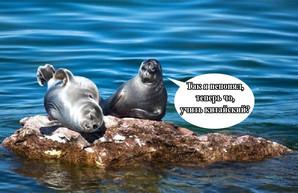 Байкал не ваш! Китай неспешно оккупирует главное пресноводное озеро планеты