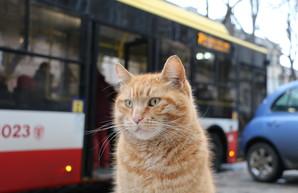 Новые скульптуры: коты для Одессы больше чем коты (ФОТО)