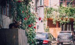 Кишинев глазами одессита: зелень, безлюдные улицы и архитектура (ФОТО)