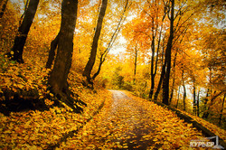 Львовская золотая осень (ФОТО)