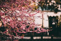 В Одессу пришла настоящая весна