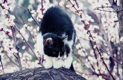 Одесские пятничные котики наслаждаются приходом весны (ФОТО)