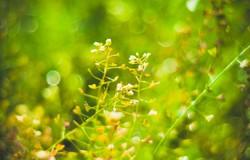 Весенняя красота одесского парка Победы (ФОТО)