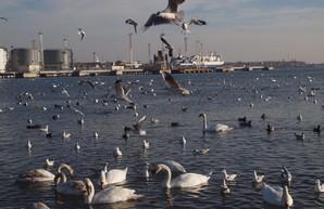 На мост через Сухой лиман по трассе Одесса - Черноморск выделили 57 миллионов