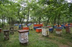 Пчелиная усадьба