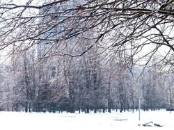 В Одессе обледенели деревья (ФОТО, ВИДЕО)