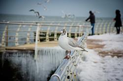 Море у берегов Одессы успокоилось: люди вышли гулять на Ланжерон (ФОТО)