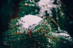 цветной снег в одессе
