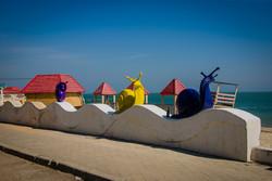 Гигантские улитки поселились на пляже на Большом Фонтане (ФОТО)