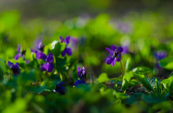 Весенние краски Парка Победы (ФОТО)