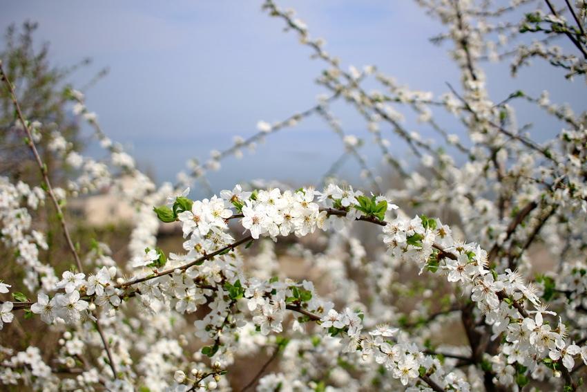 фото весна в одессе лет любимой