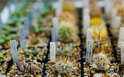 В Одессе проходит выставка кактусов (ФОТО)