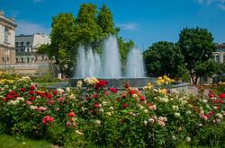 Фото дня: около Оперного театра распустились розы