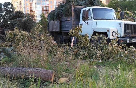 На Гагаринском плато в Одессе снова орудуют лесорубы (ВИДЕО)