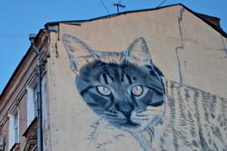 Гигантский кот поселился в центре Одессы (ФОТО)
