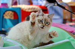 В Одессе прошел фестиваль котов и кошек (ФОТО)