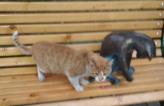 В Одессе снова поселилась кошка-геймер (ФОТО)