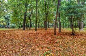 Осень пришла в Одессу: парк Шевченко (ФОТО)