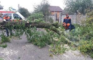 Непогода обрушилась на Одессу и юг Украины: обесточено 205 населенных пунктов (ФОТО, ВИДЕО)