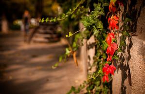 В Одессу пришла золотая осень (ФОТО)