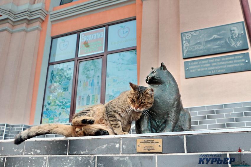 Кошки одесса с фото