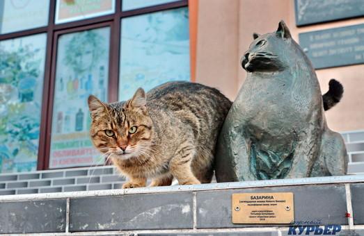 Самая большая кошка Одессы обзавелась другом (ФОТО)