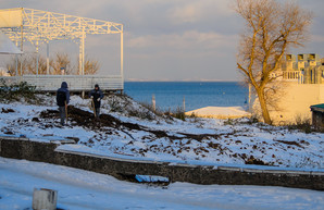В Одессе снова массово пилят деревья на пляже Ланжерон (ФОТО)