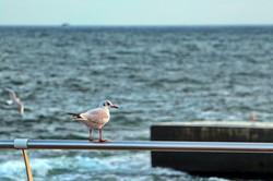 В Одессе море и небо окрасились в необычно яркие цвета (ФОТО, ВИДЕО)