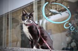 В Одессе открыли скульптуру кота Челентано (ФОТО, ВИДЕО)