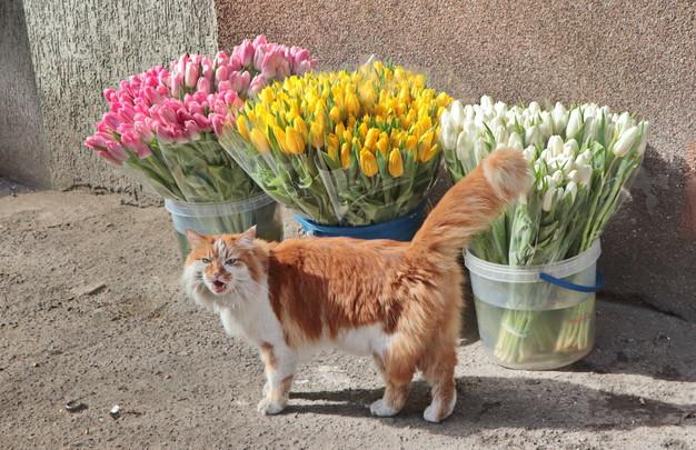 С днем Весны и Любви, дорогие наши весенние и любимые женщины!