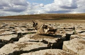 Экологическую катастрофу в Крыму отвлекут Украиной