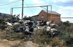 Оккупированный Крым утопает в горах мусора (фото)