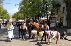 Одесский мэр решил разогнать эксплуататоров животных с Дерибасовской