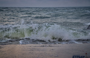 В Чёрном море регистрируют увеличение биоразнообразия