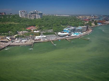 На Ланжероне владельцы дельфинария хотят расчистить и благоустроить набережную