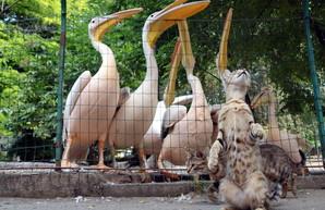 В субботу одесский зоопарк отметит свой день рождения