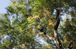 В Одессе пройдут экологические акции в парке Шевченко