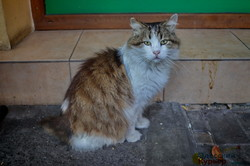 Октябрьские одесские котики (ФОТО)