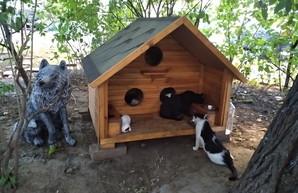 Общественный бюджет Одессы: 500 тысяч на домики для котов
