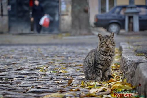 Общественный бюджет Одессы: 1,5 миллиона на «кошачий маршрут»