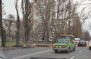 В Одессе бушует непогода: ветер валит деревья