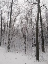 В Одесской области выпал первый снег (ФОТО)