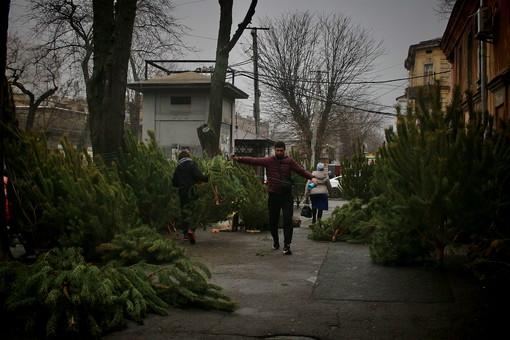 В Одессе полиция проверяет торговлю новогодними елками