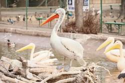 После реконструкции вход в одесский зоопарк будет перенесён