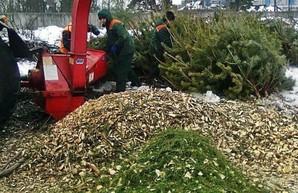 За три недели одесситы сдали на переработку 20 тысяч новогодних елок